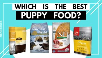 Dry Puppy food review