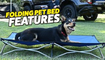 Adventure Kings Folding Dog Bed Review