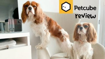 PETCUBE PLAY 2 REVIEW