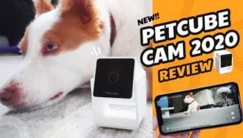 PetCube Cam 2020 Review