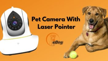 Pet Camera With Laser Pointer Review